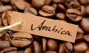 Арабика — самый популярный сорт кофе