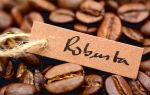Кофе Робуста – терпкий вкус и аромат
