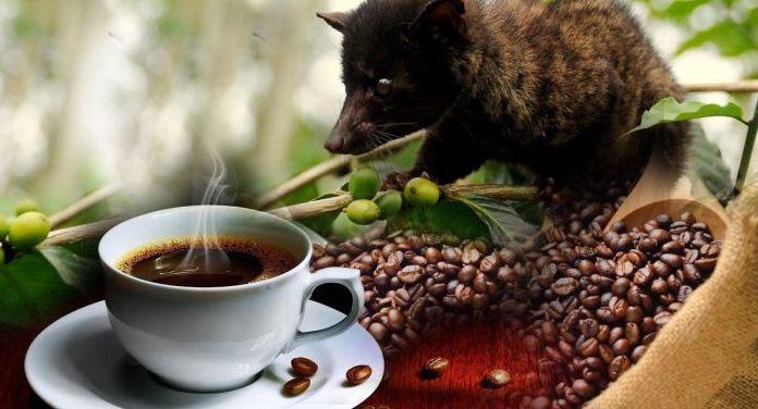 кофе лювак
